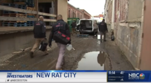 Ultra Safe Rodent Specialists Featured On New Rat City NBC Boston News