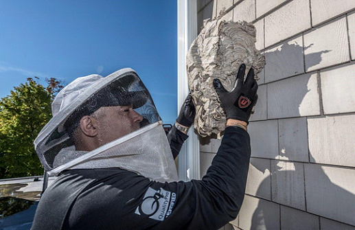 Wasp and Hornet Nest Removal