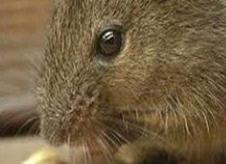 boston rodent control