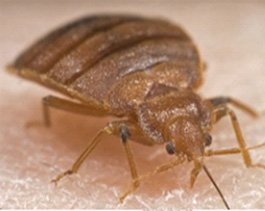 Syracuse Bed Bug Treatment