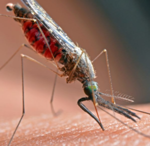 Massachusetts Mosquito Alert